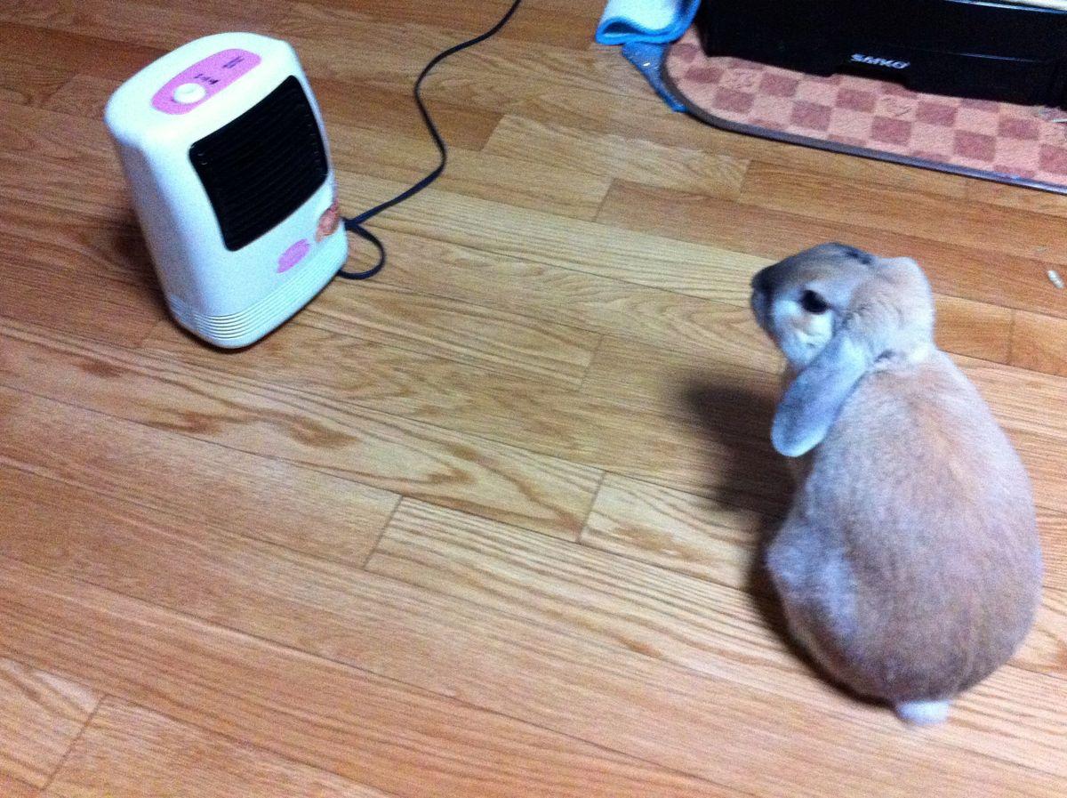 暖まるウサギ